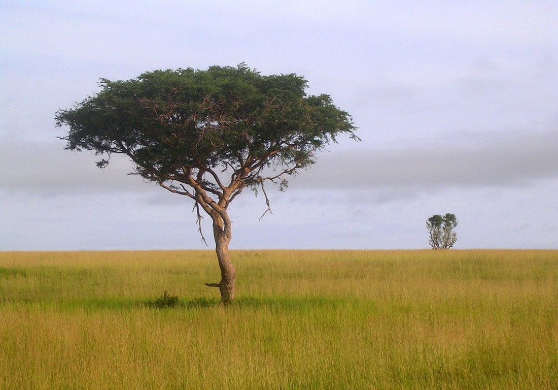 African plains with a lonely tree